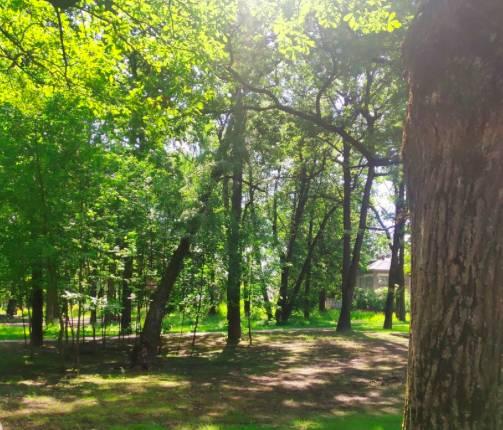 В Брянске в парке Пушкина дерево грозит рухнуть на головы отдыхающим