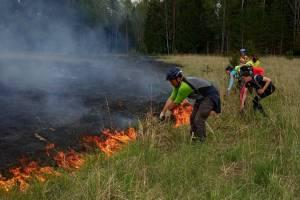Брянцы во время велокросса потушили лесной пожар