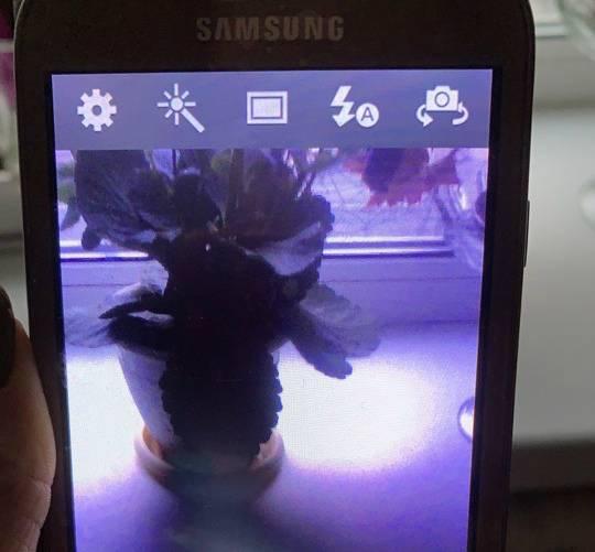 В Брянске женщине продали на улице сломанный мобильник