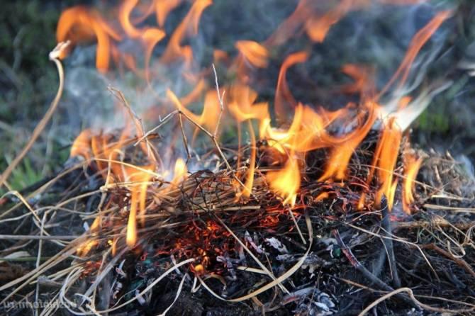 В Брянской области установился 2 класс пожарной опасности