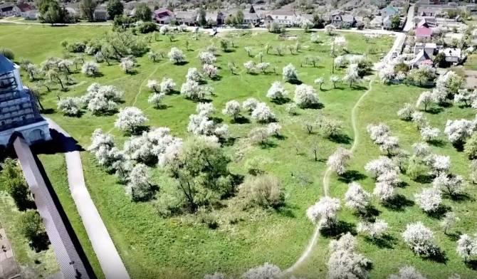 Под Брянском завораживающую красоту яблоневого сада сняли на видео