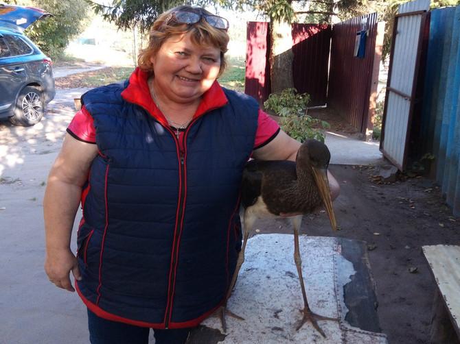 В брянском домашнем приюте для птиц появился черный аист