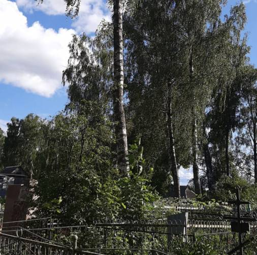В Рогнедино чиновники спилили аварийные деревья на кладбище