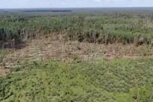 Брянцам показали последствия бушевавшего влесах урагана