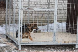 В Брянске появится сайт приюта для бездомных животных