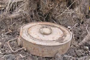 В лесу под Карачевом нашли противотанковую мину