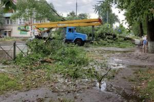 В Брянске упавшие деревья раздавили 6 автомобилей