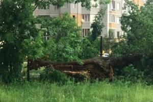 В Брянске ураганный ветер обрушил дерево во дворе детского сада