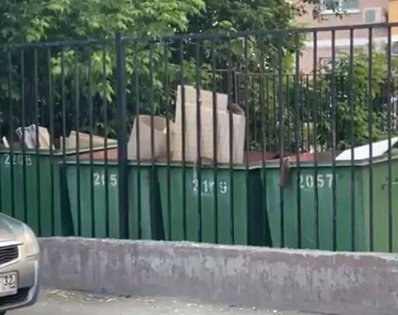 В Брянске крысы оккупировали контейнерную площадку на улице Степной