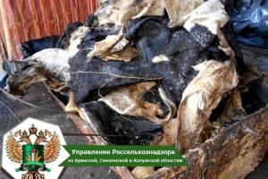 На Брянщине утилизировали 800 килограммов белорусских шкур КРС