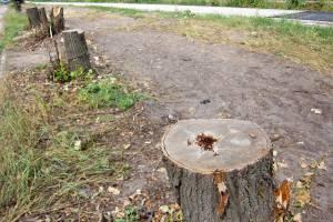 В Брянске для ликвидации «легендарной» лужи на Медведева пришлось пилить деревья