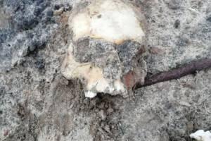 В селе под Новозыбковом нашли человеческие останки