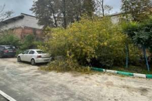 В центре Брянска рухнувшее дерево едва не придавило машину