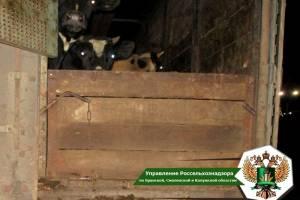 В Брянской области пресекли поставку нелегального скота