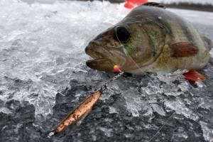 В Брянской области перенесли чемпионат по спортивной ловле на мормышку