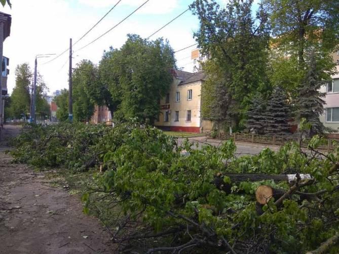 В Брянске варварски вырубили деревья на улице Фокина