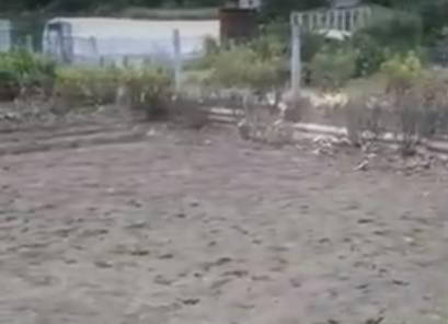 Потоп на Романа Брянского оставил дачников без урожая