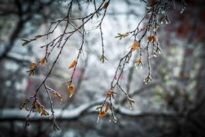 Брянцам 8 апреля обещают дождь со снегом и сильный ветер