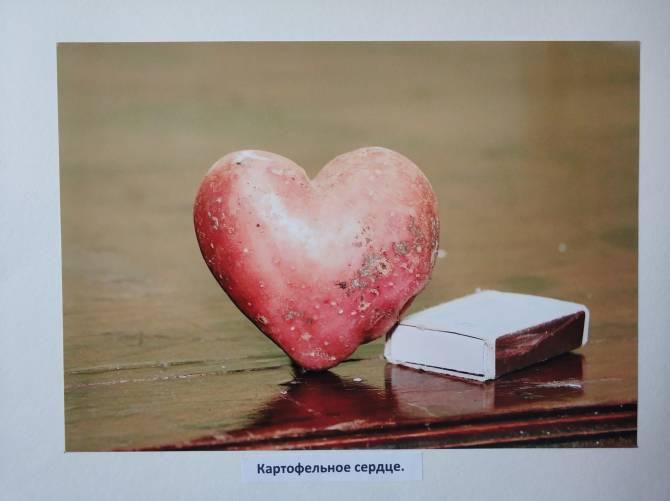 На выставке в Стародубе показали чудо-огурец и картофельное сердце