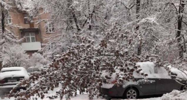 В центре Брянска на автомобили рухнуло несколько деревьев