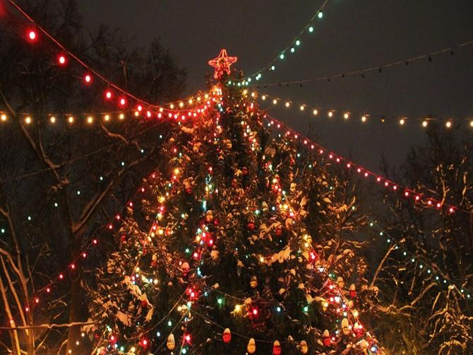 В Брянске разыскивают главную новогоднюю ель