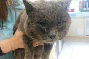 Брянцы нашли в мешке избитого кота