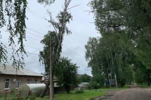 Жители Брянска пожаловались на опасную березу на улице Угольной