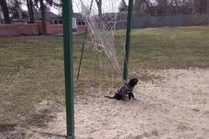В Карачеве спасли застрявшего в сетке футбольных ворот пса