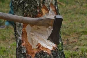 На Брянщине инженер лесопользования незаконно нарубил леса на 9 миллионов рублей