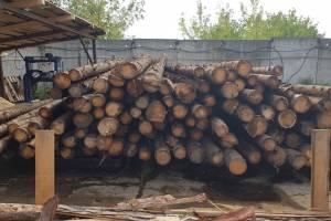 В Выгоничском районе нашли пожароопасную пилораму