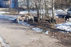 Жителей поселка Локоть напугала стая собак
