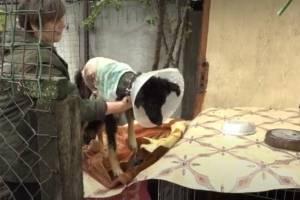 В Брянске собакам и кошкам в частном приюте грозит голодная смерть