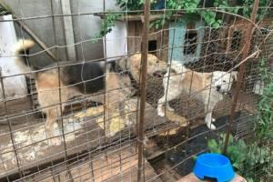 В Брянске строительство муниципального приюта для животных снова откладывается