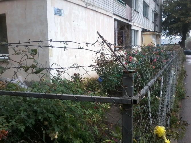 В Брянске цветник возле общежития огородили колючей проволокой