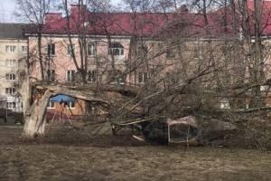 В Брянске огромное дерево раздавило ржавый детский городок