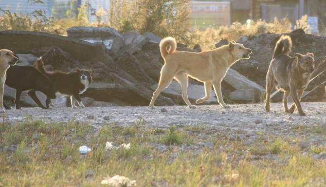 В Карачеве после нападения бродячих псов на людей активизировались догхантеры