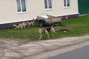 Бездомные собаки затерроризировали жителей Карачева