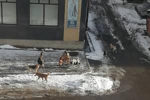 В Клинцах свора собак «налетела» на женщину с ребёнком