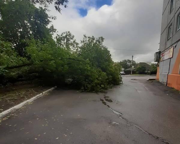 В Брянске на улице Костычева рухнуло дерево
