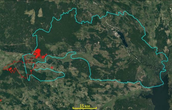 Greenpeace: Брянщине может угрожать дым от лесных пожаров в Чернобыле
