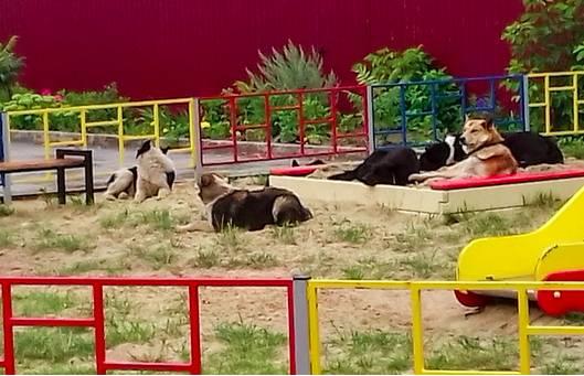 В Брянске на улице Уральской бродячие псы оккупировали детскую площадку