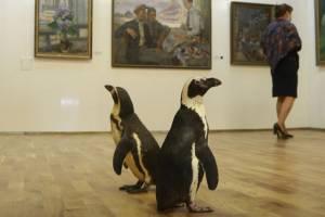 Два пингвина пришли на выставку в Брянский художественный музей