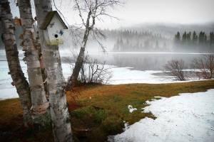 В Брянской области потеплеет до +12 градусов