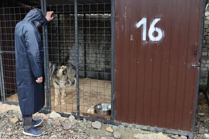 В Брянске обсудили будущее приюта для бездомных животных