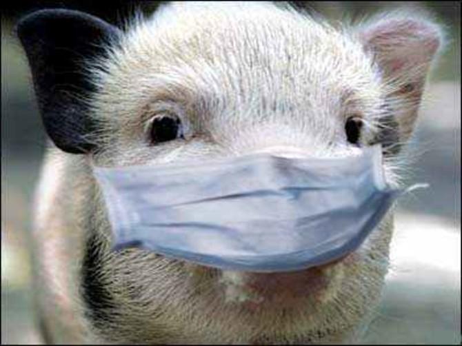 На Брянщине вышли на борьбу с африканской чумой свиней