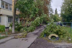 В Брянске во дворе многоэтажки на Володарке рухнуло дерево
