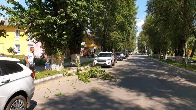 В Брянском посёлке упавшая ветка едва не покалечила семью