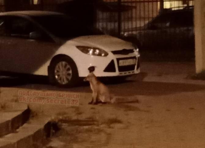 В Брянск стали наведываться лисы