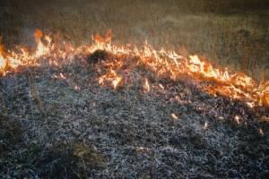 Брянские пожарные за сутки дважды выезжали на тушение травы