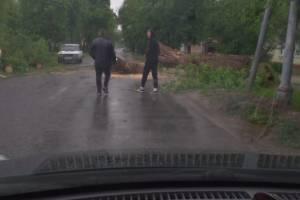 В брянском посёлке Белые Берега на дорогу рухнуло огромное дерево